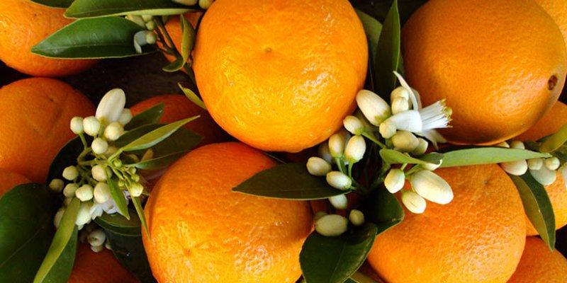 Met Orangenhonig - Honigwein aus Orangenblütenhonig