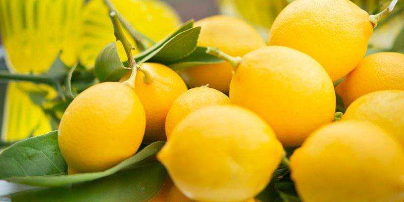 Met Zitrone - fruchtiger Honigwein mit Zitronen